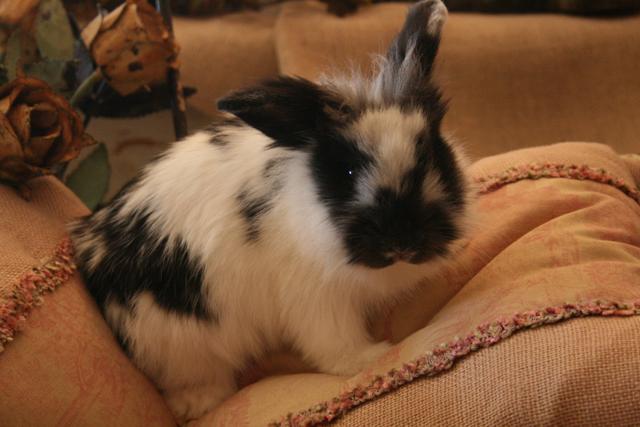 Bunny on burlap