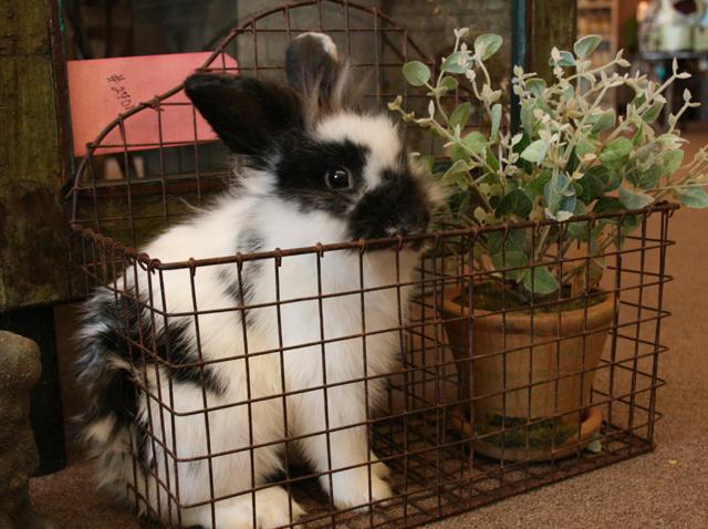 Bunny in a bin